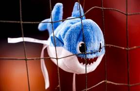 Image result for baby sharks in washington parra dugout