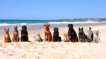 Watch 'Happy': the Australian version with 12 beach dogs and 1 ...